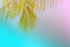 Lata drzewko palmowe w chmurach z kopii przestrzenią i niebieskim niebie Minimalny pojęcie Pasteli/lów brzmienia Obrazy Royalty Free