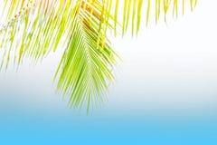 Lata drzewko palmowe w chmurach z kopii przestrzenią i niebieskim niebie Minimalny pojęcie Pasteli/lów brzmienia rozlazły tło Obrazy Stock