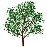 Lata drzewo Zdjęcie Royalty Free