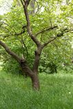 Lata drzewo w parku obrazy royalty free