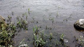 Lata en el río, río del Fox, Illinois fotografía de archivo