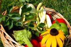 Lata i jesieni tło Fotografia Royalty Free