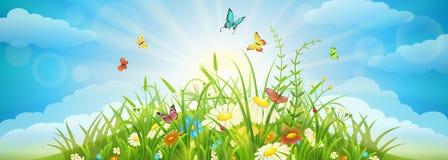 Lata i wiosny łąki tło Zdjęcia Stock