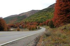 lata indyjski Piękni barwioni drzewa, las, wzdłuż Carretera Austral, Chile Fotografia Royalty Free