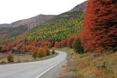 lata indyjski Piękni barwioni drzewa, las, wzdłuż Carretera Austral, Chile Obrazy Stock