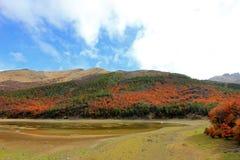 lata indyjski Piękni barwioni drzewa, las, wzdłuż Carretera Austral, Chile Obraz Royalty Free