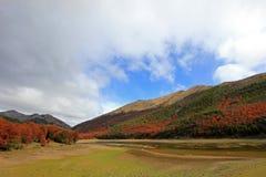 lata indyjski Piękni barwioni drzewa, las, wzdłuż Carretera Austral, Chile Zdjęcia Royalty Free