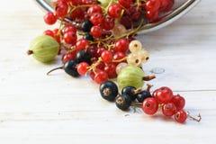 Lata jagody, agresty i rodzynki w, czerwieni, bielu i blac, Obrazy Royalty Free