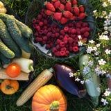 Lata jagody, warzywa i owoc na talerzu na trawie, Odgórny widok fotografia royalty free
