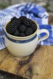 Lata, jesieni żniwa sezonowy owocowy pojęcie/ Czernicy zdjęcia stock
