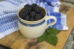 Lata, jesieni żniwa sezonowy owocowy pojęcie/ Czernicy obraz royalty free