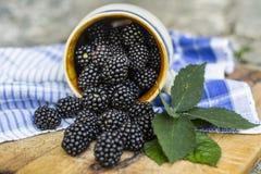 Lata, jesieni żniwa sezonowy owocowy pojęcie/ Czernicy zdjęcie royalty free