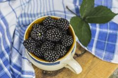 Lata, jesieni żniwa sezonowy owocowy pojęcie/ Czernicy zdjęcie stock