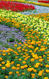 Lata kolorowy flowerbed Obraz Royalty Free