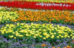 Lata kolorowy flowerbed Zdjęcie Royalty Free