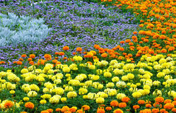 Lata kolorowy flowerbed Zdjęcia Royalty Free