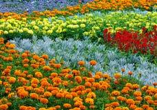Lata kolorowy flowerbed Obraz Stock