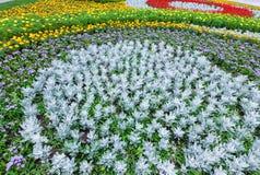 Lata kolorowy flowerbed Tło Obrazy Stock