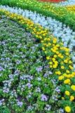 Lata kolorowy flowerbed Tło Zdjęcie Royalty Free