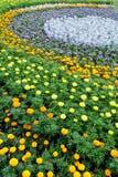 Lata kolorowy flowerbed Tło Zdjęcia Royalty Free