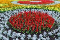 Lata kolorowy flowerbed Tło Zdjęcia Stock