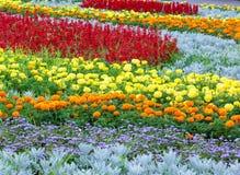 Lata kolorowy flowerbed Tło Fotografia Royalty Free