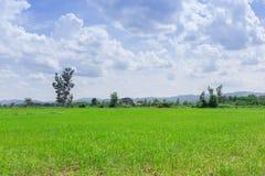 Lata krajobrazowy pole uprawne Zdjęcie Stock
