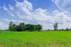 Lata krajobrazowy pole uprawne Zdjęcie Royalty Free