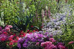 Lata kwiecenia ogródu miejsce z pelargonium i petunią fotografia stock