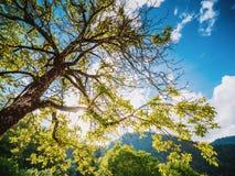 Lata lasowy drzewo zdjęcie stock