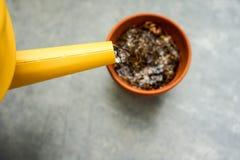 Lata molhando amarela com o potenciômetro seco da tonelada Fotos de Stock