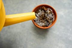 Lata molhando amarela com o potenciômetro seco da tonelada Foto de Stock Royalty Free
