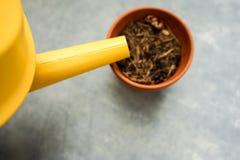 Lata molhando amarela com o potenciômetro seco da tonelada Fotografia de Stock