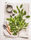 Lata molhando com ferramentas de jardinagem e grupo verde dos galhos no fundo do papel e da mesa Fotos de Stock