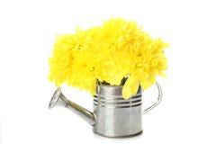 Lata molhando com flores amarelas Foto de Stock Royalty Free