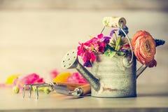 A lata molhando com jardim floresce ferramentas do grupo e de jardinagem na tabela Fotografia de Stock