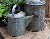 A lata molhando com leite pode e plantas da hortelã cobertas com a chuva fotos de stock