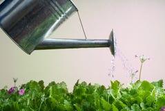 Lata molhando de aço inoxidável usada jardinando Imagens de Stock