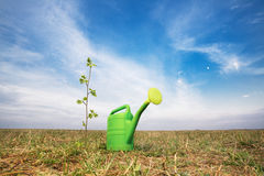 Lata molhando e planta crescente Fotografia de Stock