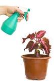 Lata molhando e planta isoladas Fotografia de Stock Royalty Free