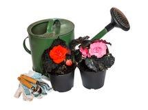 Lata molhando, plântulas verdes da flor e ferramentas de jardinagem isoladas Imagens de Stock Royalty Free