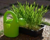 Lata molhando verde e grama verde fotografia de stock royalty free