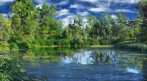 lata nad jeziorem dziki Obrazy Royalty Free