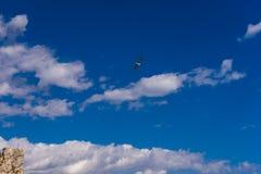 latać po mewa morskim Zdjęcia Royalty Free