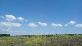 Lata pole w Ukraina Zdjęcia Stock