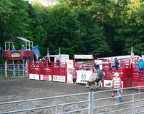 Lata rodeo byka jazda Obrazy Stock