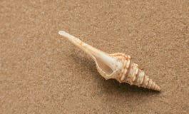 Lata tło Lat akcesoria, lata pojęcie Rozgwiazda z piaskiem jako tło Zdjęcie Royalty Free