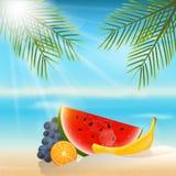 Lata tło z owoc Pomarańcze, banan, winogrona i watermel, ilustracja wektor