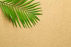 Lata tło z Zielonym Palmowym liściem Fotografia Stock