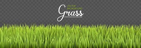 Lata tło Zielonej trawy granicy Tekstury wysokości zieleni świeża trawa odizolowywająca na przejrzystym tle wektor royalty ilustracja